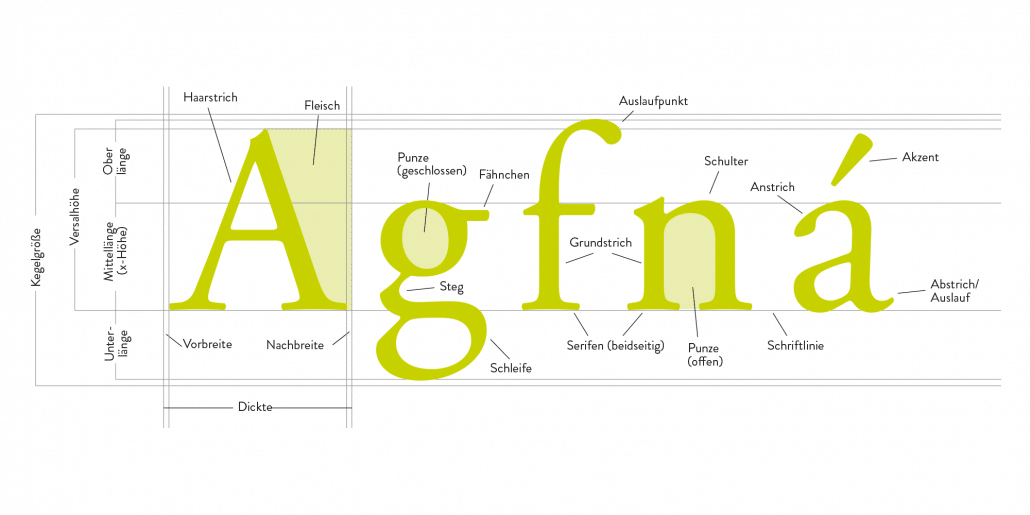 typografische Fachbegriffe für Buchstabenelemente